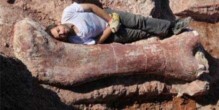 阿根廷发现史上最大恐龙化石